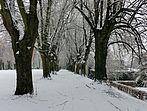 Lindenallee im Schlosspark